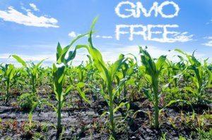 GMO Testing