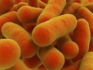 Food Testing & Analysis - Salmonella